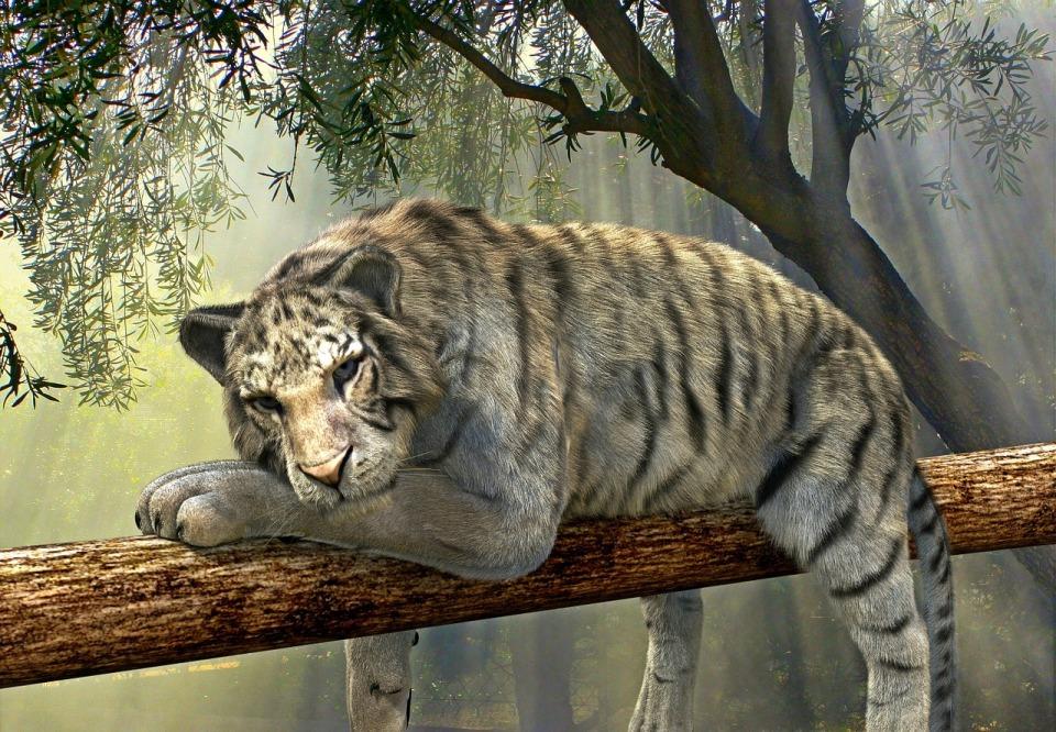 tiger-1098607_1280