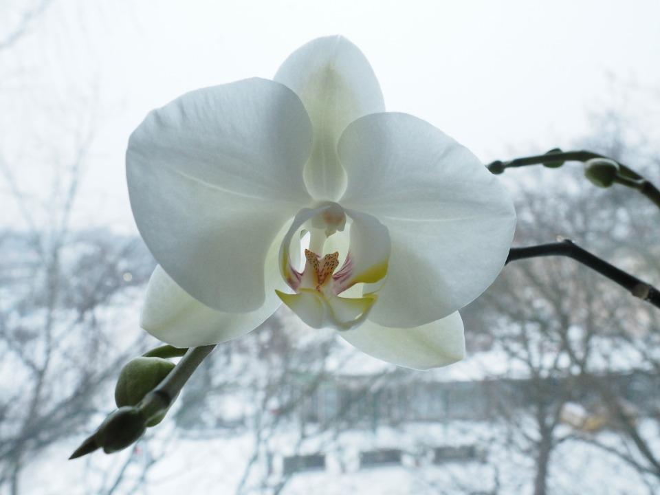 OrquideaenInvierno